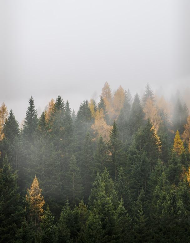 La natura della Val di Fassa è la prima ispirazione del nostro lavoro.